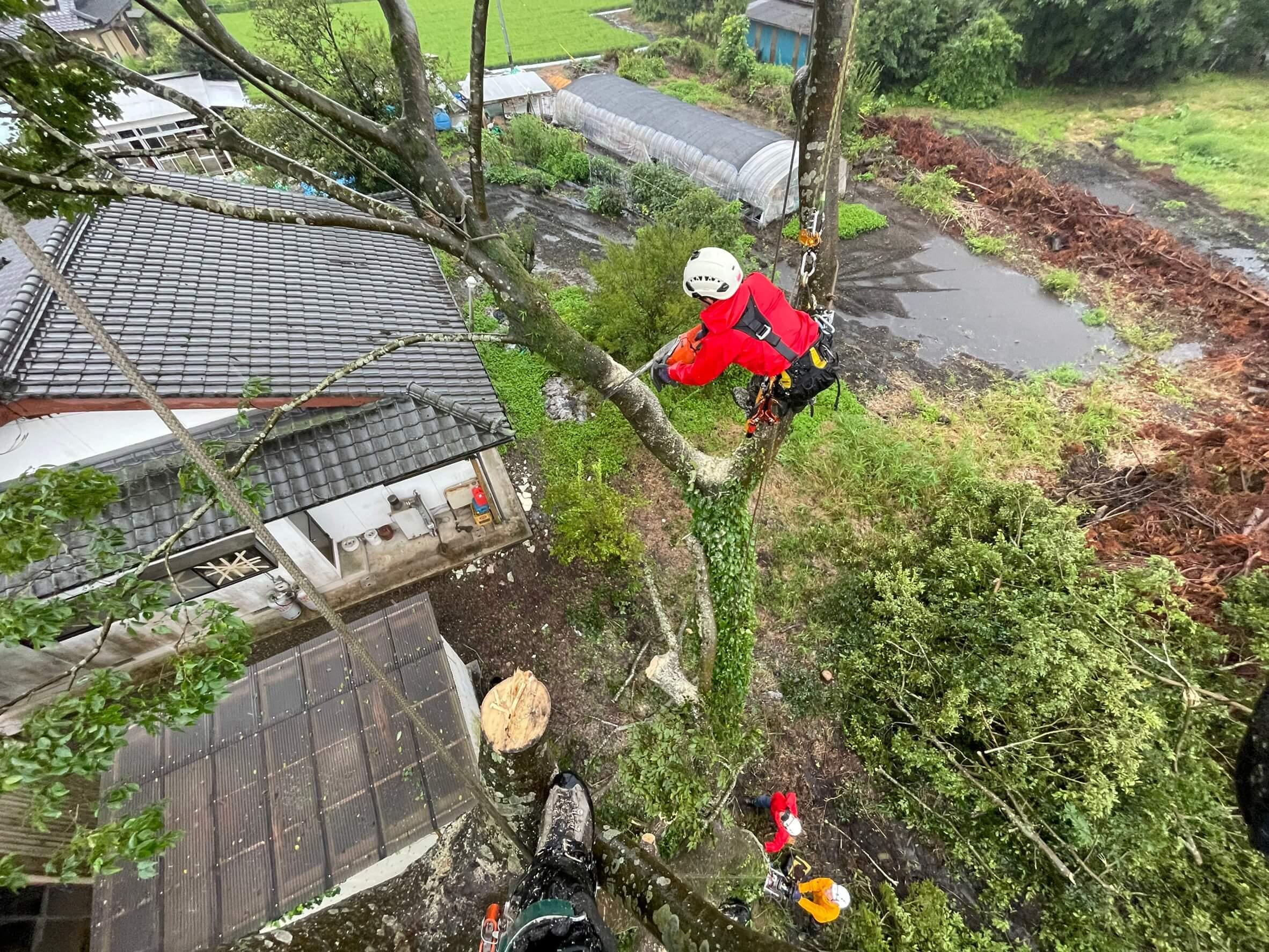 ロープで吊った枝葉を切る田嶋。切った枝は構造物を避けて静かに地上へ下ろします